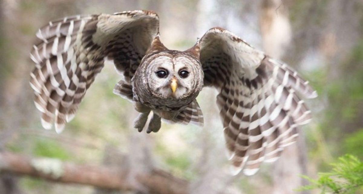 5 Burung Paling Berbahaya di Dunia, Ada yang Pernah Kamu Temui?