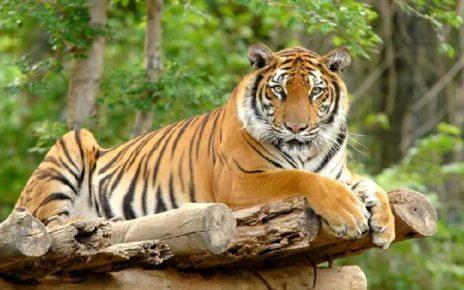 Ini 7 Hewan Paling Berbahaya di Asia, Ada dari Indonesia