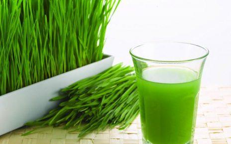 Khasiat Mengonsumsi Wheatgrass Yang Tidak Anda Ketahui