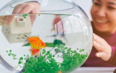 Ini 4 Manfaat Memelihara Ikan bagi Kesehatan
