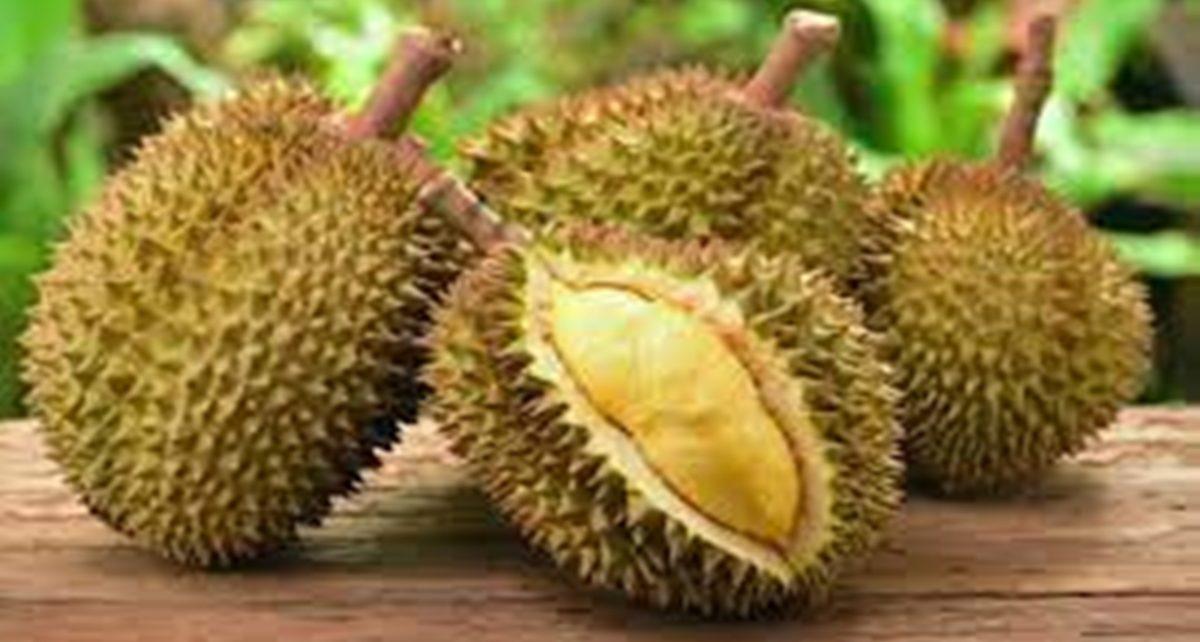 12 Manfaat Buah Durian untuk Kesehatan, Jarang Diketahui