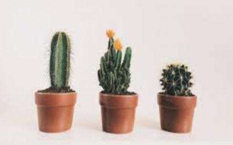 15 Jenis Tumbuhan Tropis yang Cocok Jadi Tanaman Hias, Cantik dan Asri