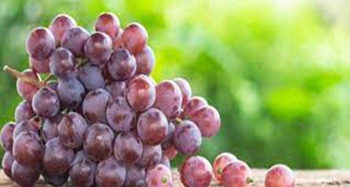 8 Manfaat Buah Anggur Merah untuk Kesehatan, Konsumsi Secara Teratur